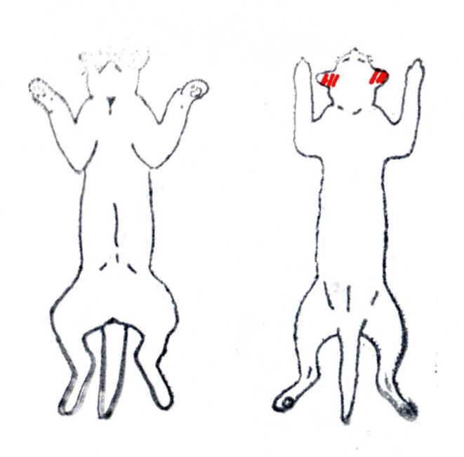 大明気功体験談:『毛根もだめになっていた犬や猫の脱毛が、アルコール+生姜液の塗布により発毛』6