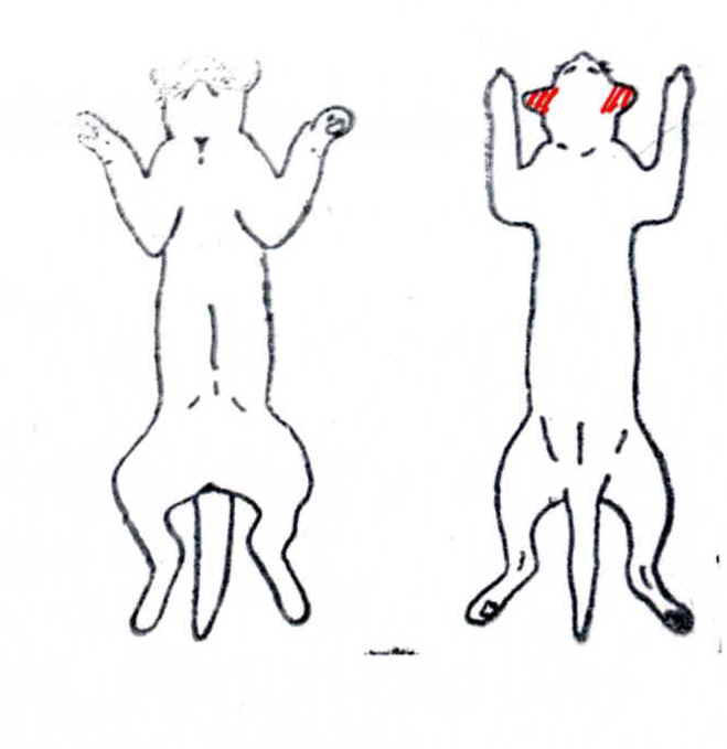 大明気功体験談:『毛根もだめになっていた犬や猫の脱毛が、アルコール+生姜液の塗布により発毛』7